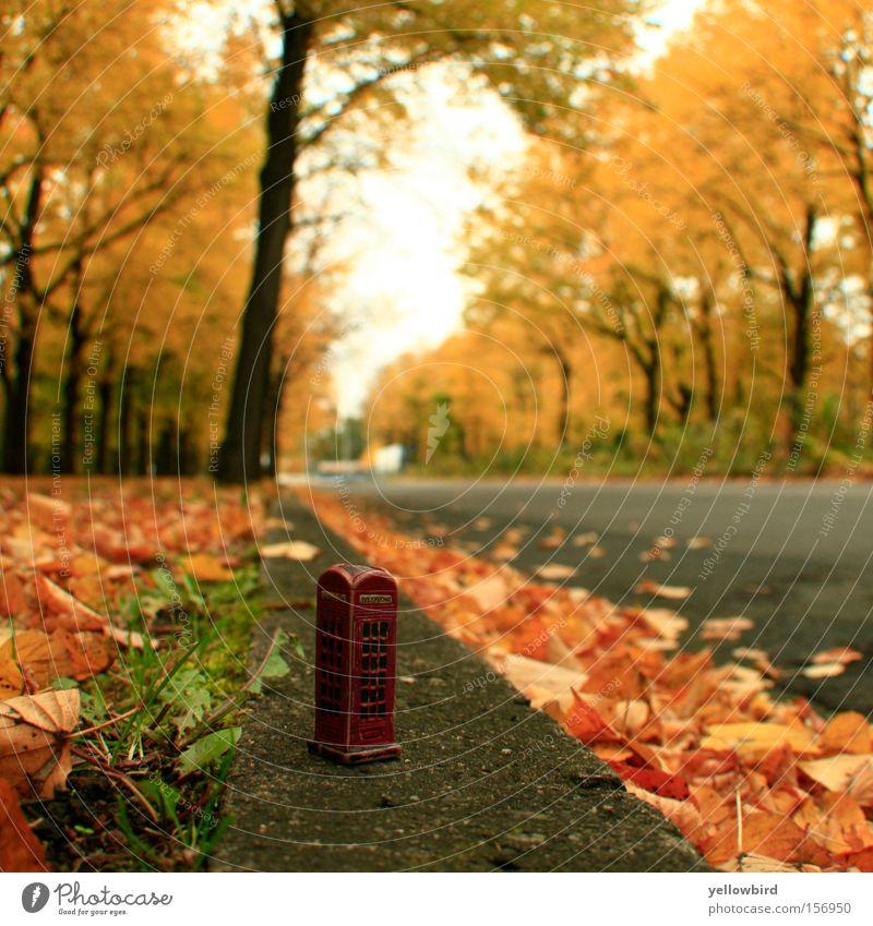 Telefon aus dem Zwergenland Telekommunikation Herbst Baum Blatt Verkehrswege Straße Wege & Pfade Abenteuer ästhetisch Natur Perspektive Telefonzelle Fußweg