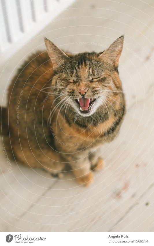 Hungääär! Tier Haustier Katze 1 sprechen niedlich Originalität braun weiß Leben Appetit & Hunger Durst gefräßig Farbfoto Innenaufnahme Tag