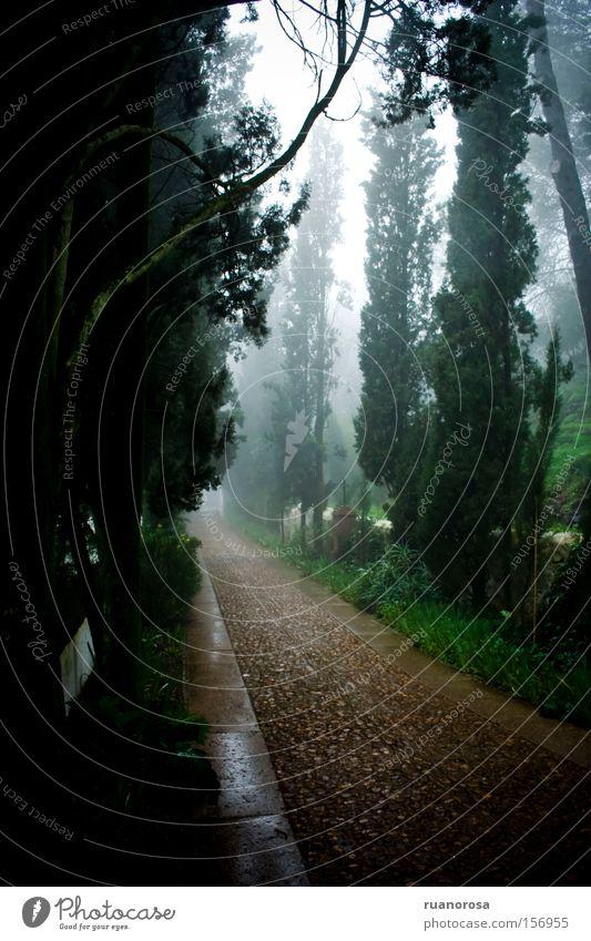 Einsiedelei Nebel ruhig Wege & Pfade Zypresse Baum Natur Physis Wald grün braun