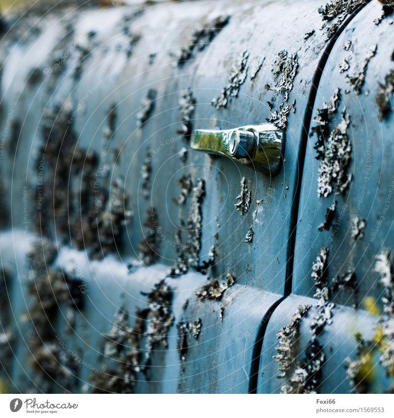 Patina Natur Pflanze Luft Sommer Klima Klimawandel Moos Wildpflanze Flechten Verkehrsmittel Autofahren PKW Autotür Metall entdecken natürlich trashig blau