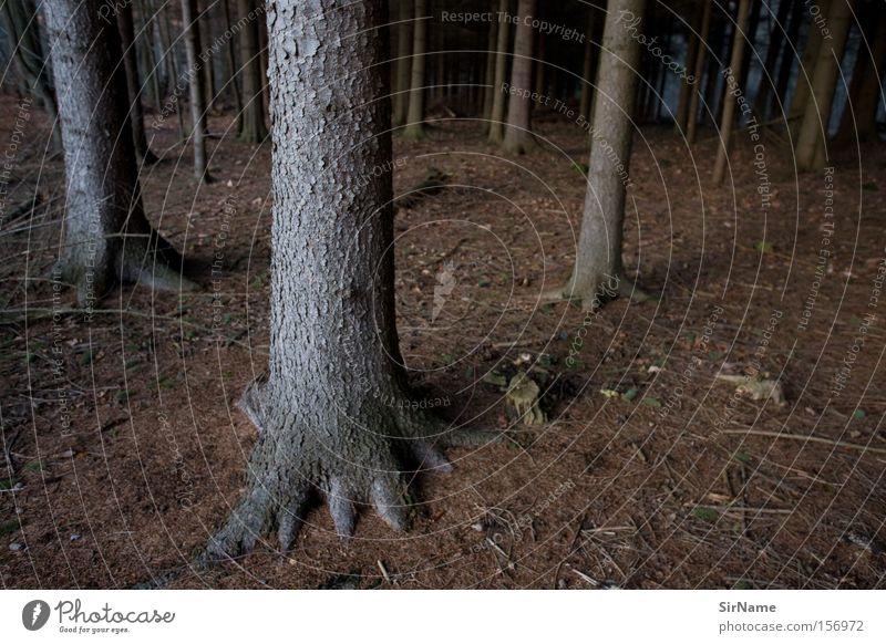 61 [winterwald] Einsamkeit Winter Wald kalt braun Deutschland Angst verloren Panik Nadelbaum Waldboden Unterholz