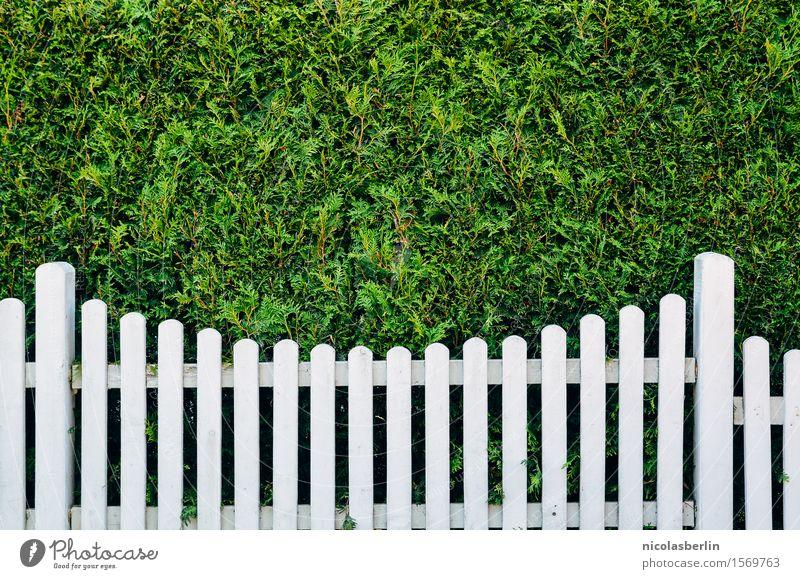Weißheit meets Grünheit Reichtum Stil Design Häusliches Leben Wohnung Garten Grünpflanze Hecke Kleinstadt Zaun Holz bedrohlich einfach elegant Stadt grün weiß