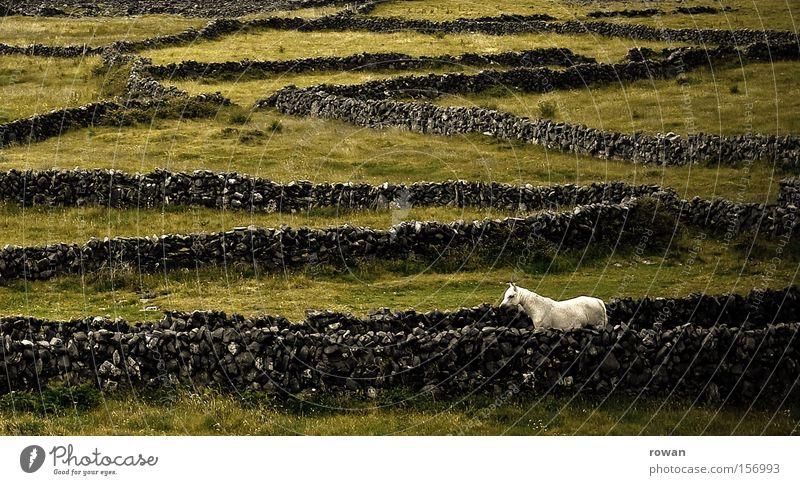 schimmel schön grün Ferien & Urlaub & Reisen ruhig Einsamkeit träumen Stein Wege & Pfade Kraft Feld elegant frei Pferd Romantik einzigartig wild