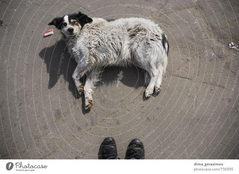 Hund liegen Asphalt Turnschuh Säugetier Schuhe wecken faulenzen Tier Mischling Haushund Störung Störenfried Straßenhund