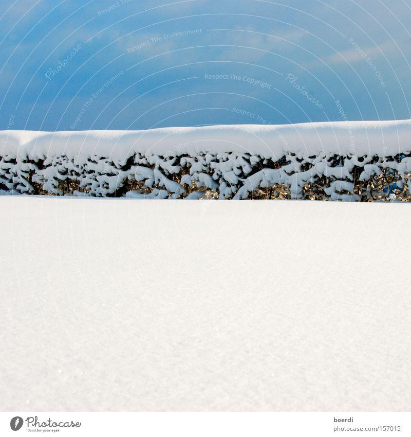 bLaupause Himmel blau schön weiß Winter kalt Schnee hell Linie Zaun Grenze Trennung Hecke Tiefschnee