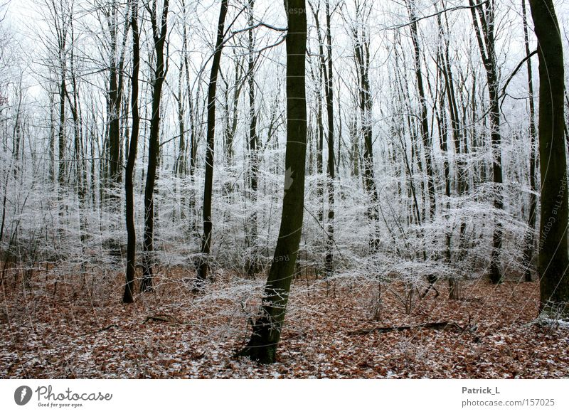 Wunsch-Wald weiß Blatt Winter schwarz dunkel Schnee träumen hell Eis Deutschland Zufriedenheit Hoffnung Neugier Märchen