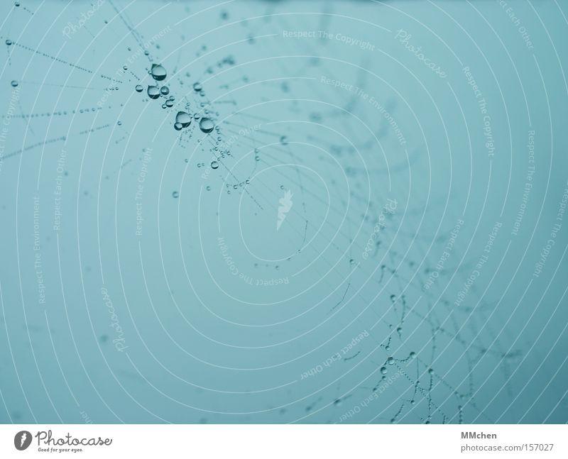 wet net Netz Spinnennetz Wassertropfen Tau Nebel Netzwerk durcheinander spinnen Tropfen Makroaufnahme Nahaufnahme Herbst Neigung Schnur
