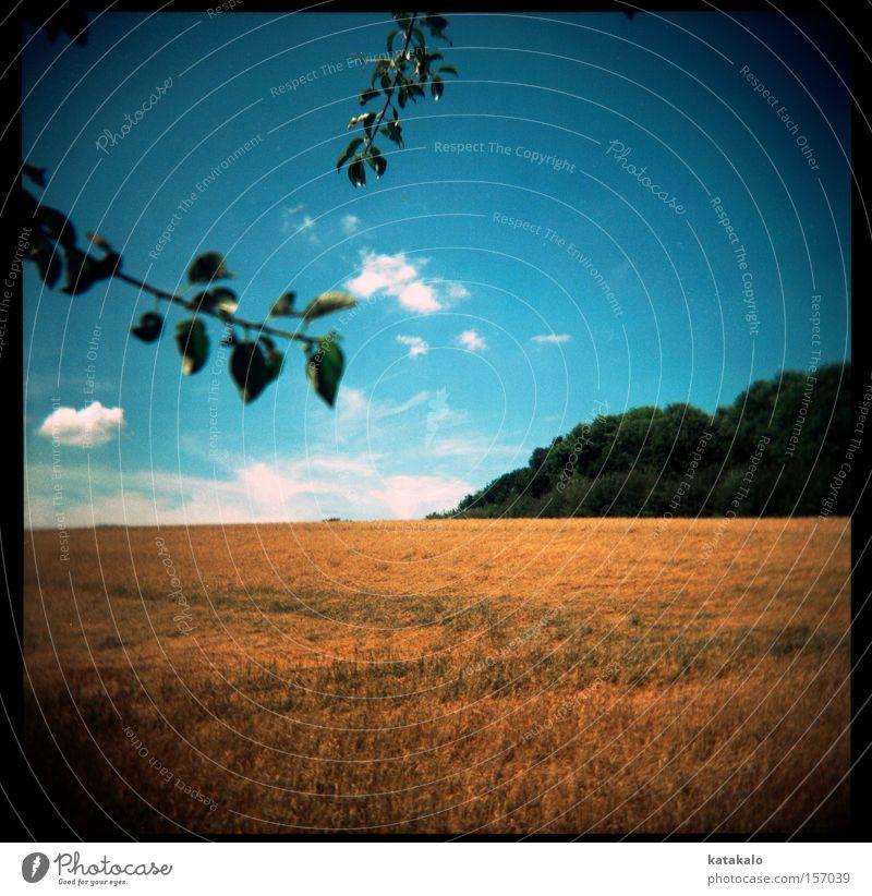 Sommersonnengelb blau Sommer Blatt Wolken gelb Holga Wald Wärme Landschaft Feld Ast analog Ernte Stroh