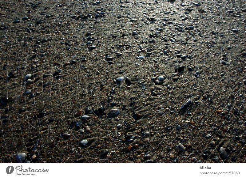 Ebbe schön Meer Strand Traurigkeit Sand Küste glänzend Hintergrundbild Trauer mehrere Boden Verzweiflung viele Muschel Schatz Ebbe