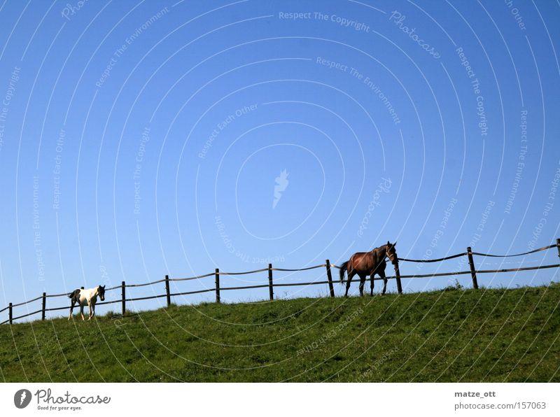 Ausritt Natur Himmel grün blau Sommer Tier Gras Pferd Rasen Weide Säugetier Reiten Weidezaun