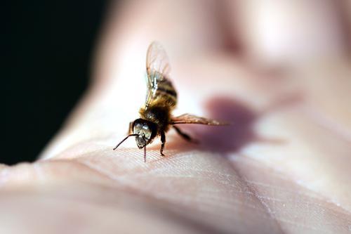Schwänzeltanz Natur schön Tier Umwelt fliegen elegant ästhetisch Erfolg Flügel Klima einzigartig Schönes Wetter sportlich Biene Haustier Tiergesicht