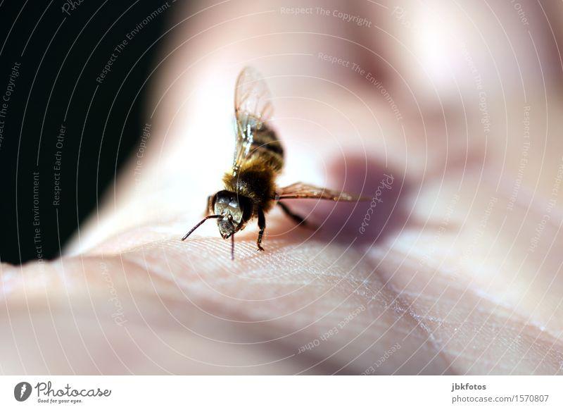 Schwänzeltanz Umwelt Natur Klima Klimawandel Schönes Wetter Tier Haustier Nutztier Biene Tiergesicht Flügel Honigbiene 1 Schwarm ästhetisch sportlich elegant