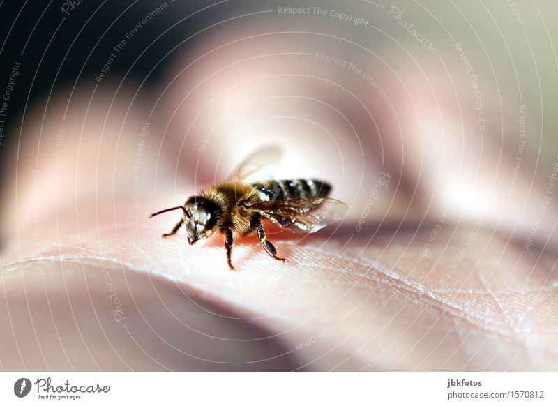 Frühlingsgefühle Lebensmittel Dessert Honig Ernährung Frühstück Umwelt Natur Landschaft Schönes Wetter Tier Haustier Nutztier Biene Honigbiene 1 ästhetisch