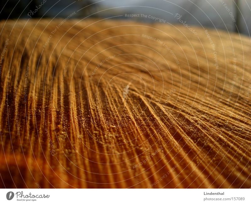 Surface of Wood Holz Oberfläche Baumstamm Säge Strukturen & Formen Furche querschnitt