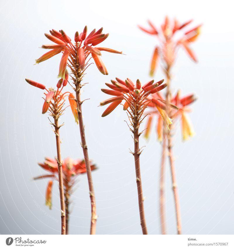 Begrüßungskomitee Himmel Pflanze Blume rot Blatt gelb Blüte Bewegung Stimmung Zusammensein Freundschaft Wachstum elegant stehen Lebensfreude Schönes Wetter