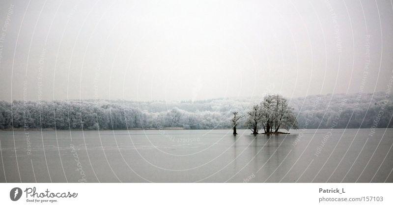 exil alt weiß Baum Winter ruhig Einsamkeit Ferne dunkel Schnee träumen See Eis hell Deutschland Vertrauen beruhigend