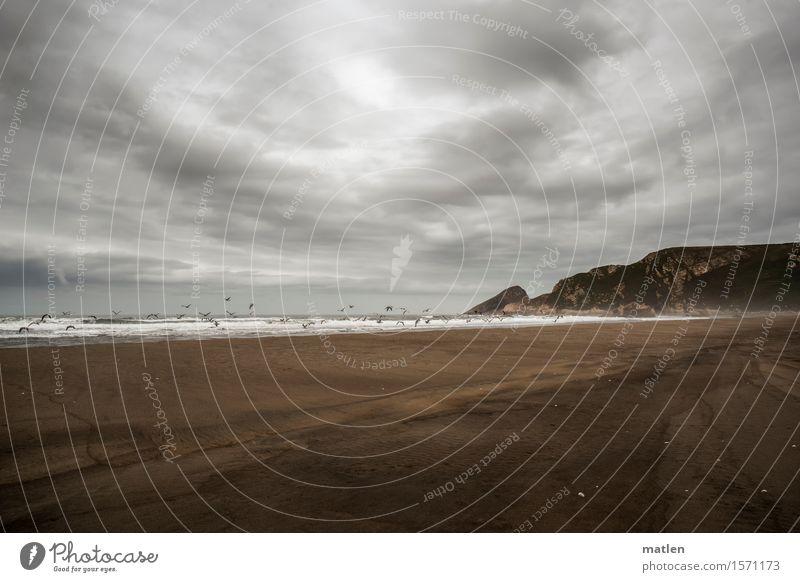 einfach nur Möwen Natur Landschaft Tier Urelemente Sand Wasser Himmel Wolken Horizont Wetter schlechtes Wetter Wind Felsen Wellen Küste Strand Bucht Meer