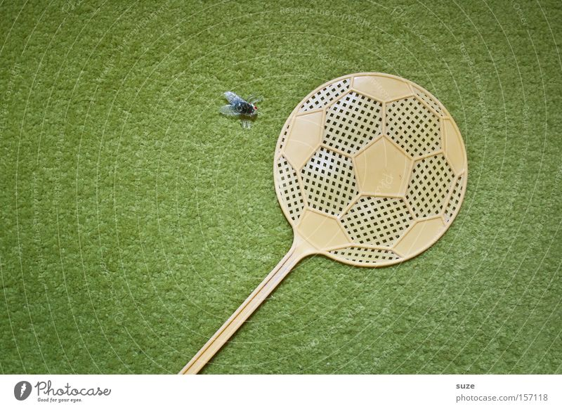Freistoß Ballsport Fußball Wiese Fliege 1 Tier Kunststoff lustig grün Teppich Insekt Dekoration & Verzierung Fliegenfalle fliegenklatsche Kreativität