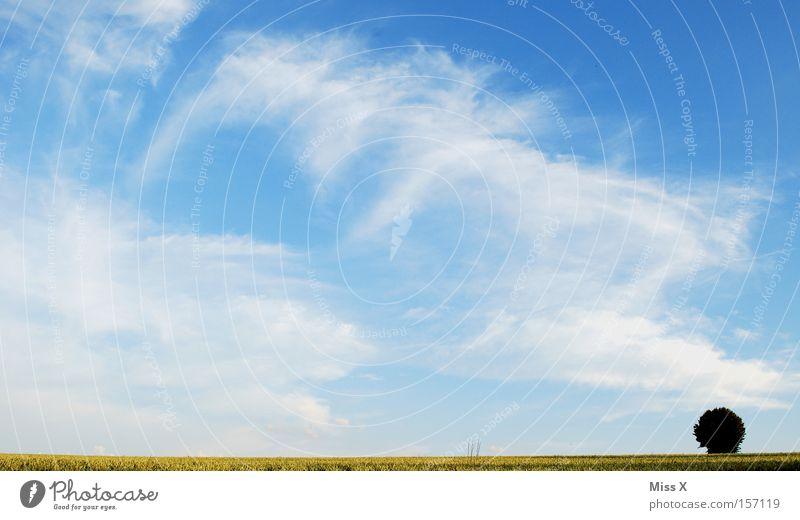 ein Sonntag in Schwaben Himmel Baum blau Sommer Wolken Einsamkeit Ferne Wiese Freiheit Landschaft Feld frei Horizont Punkt Kornfeld Schönes Wetter