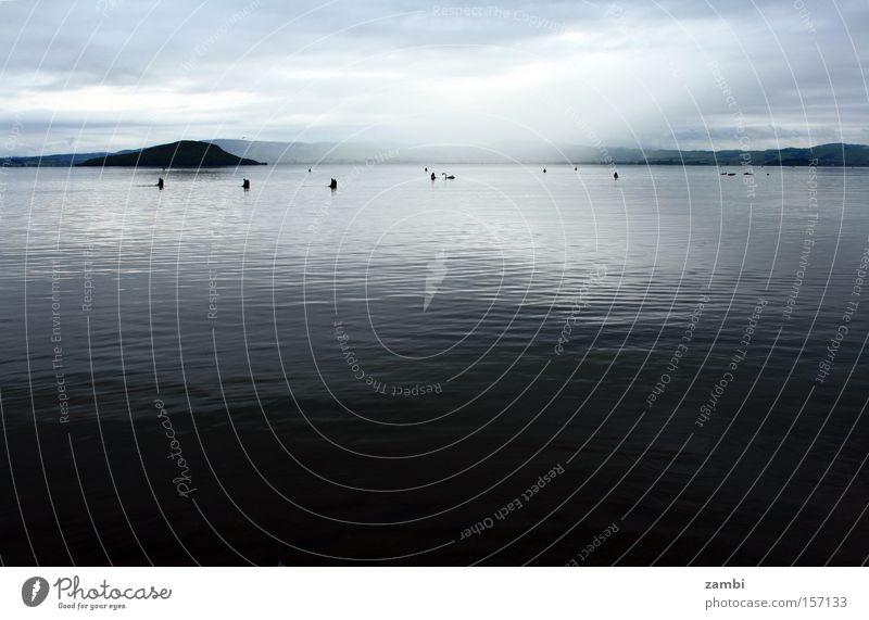 see in tränen Trauer Schwan See schwarz Gans Ente Vogel Neuseeland Wasser Morgendämmerung Suche Monochrom Schwanz Verzweiflung Lebensmittel