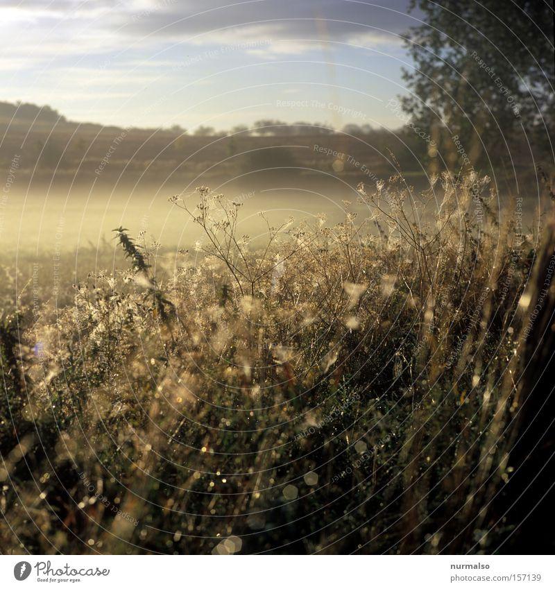 Mein Mecklenburg Natur Sommer Gefühle träumen Wassertropfen Tropfen einzigartig analog Tau Ereignisse Zauberei u. Magie Heimat Dia Mecklenburg-Vorpommern