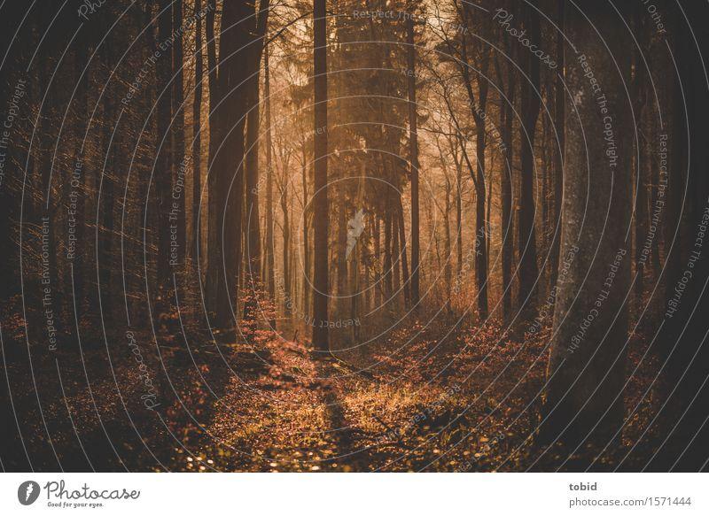 Goldener Abend Natur Landschaft Pflanze Sonne Schönes Wetter Baum Gras Sträucher Moos Wald Hügel hell Wärme Einsamkeit einzigartig Freiheit Idylle Ferne