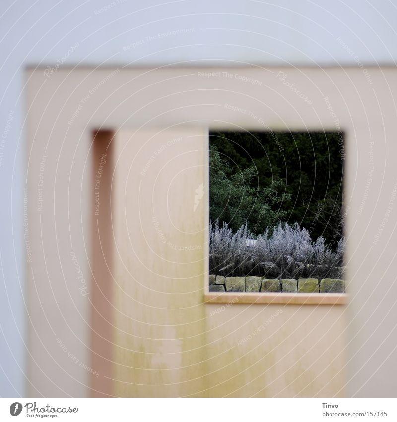 durch und durch Wiedervereinigung Durchblick Durchgang Fenster Pflanze trüb Pastellton zart Mauer Kontrast trist Grünspan Park leerstehend