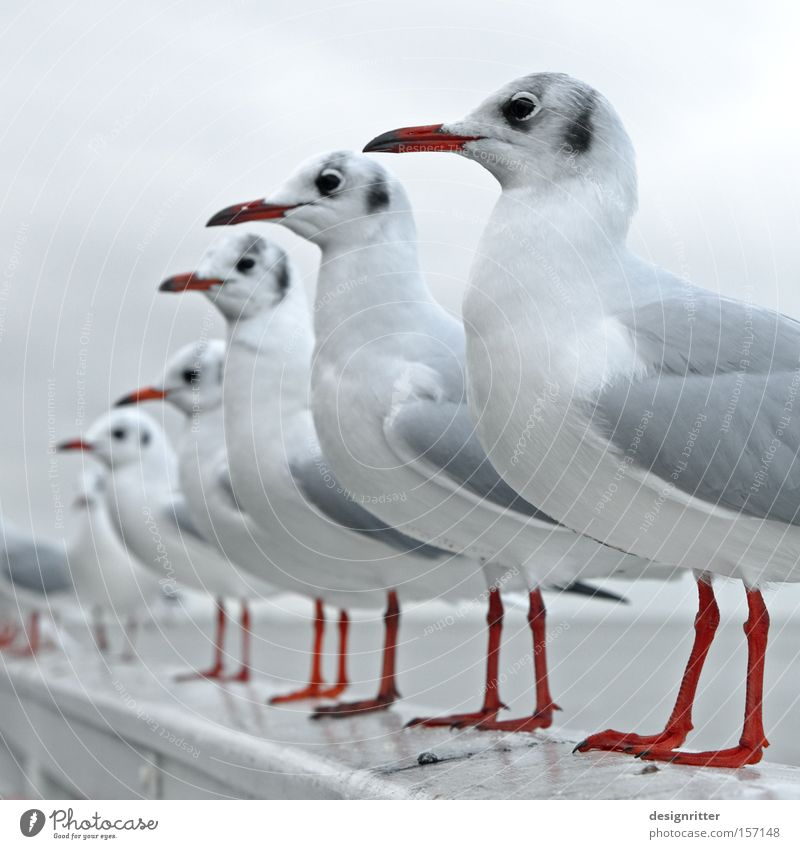 STILLG´STAN´N! Nordsee Meer Vogel Möwe Reihe Sitzreihe Ordnung warten Erwartung Futter füttern Appetit & Hunger Gier lau beobachten geordnet angetreten