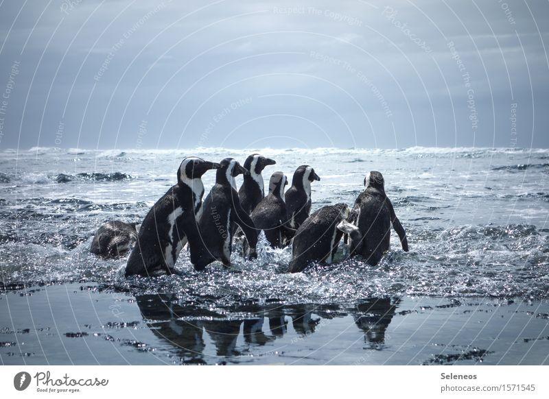 Freiheit Abenteuer Ferne Strand Meer Umwelt Natur Wasser Wolken Horizont Küste Tier Wildtier Vogel Tiergesicht Flügel Pinguin Tiergruppe Schwimmen & Baden frei