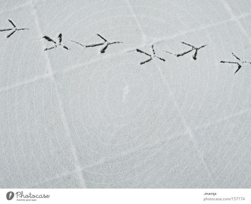 Flugroute Schwarzweißfoto Außenaufnahme Textfreiraum unten Textfreiraum Mitte Winter Schnee Luftverkehr Wege & Pfade Flugzeug Vogel Beton Fährte Fußspur fliegen