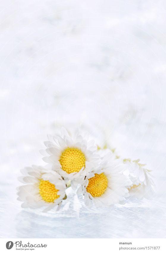 ein Haufen Blumen Natur Pflanze schön Sommer weiß gelb Blüte Frühling natürlich Gesundheit klein Gesundheitswesen hell Dekoration & Verzierung Blumenstrauß