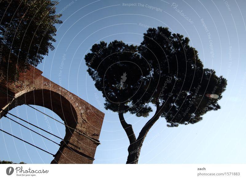 Unter den Pinien Ferien & Urlaub & Reisen Natur Himmel Wolken Pflanze Baum Baumstamm Rom Italien Stadt Hauptstadt Altstadt Platz Tor Tür alt historisch Farbfoto
