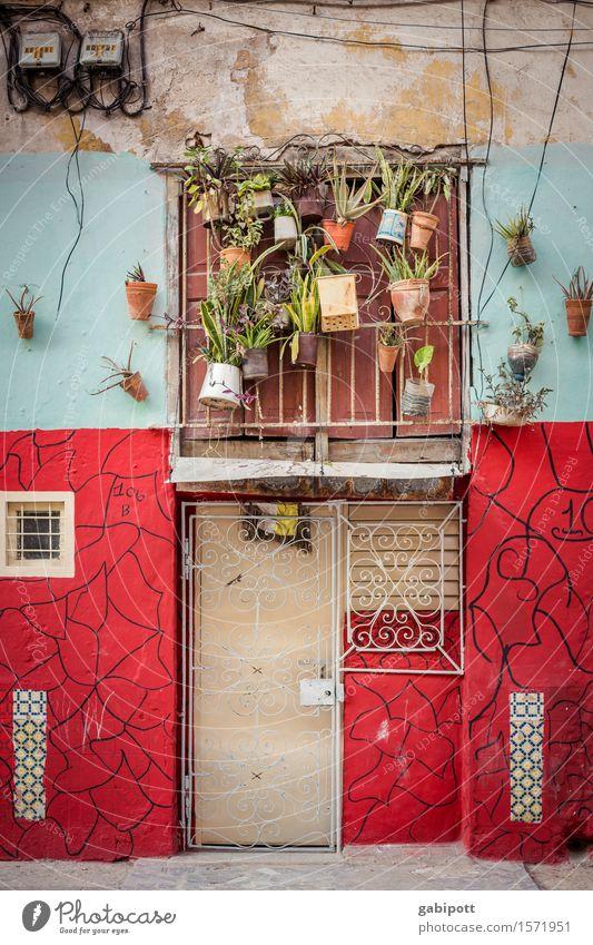 Hausschmuck Lifestyle Ferien & Urlaub & Reisen Tourismus Ausflug Abenteuer Ferne Häusliches Leben Wohnung Pflanze Blume Topfpflanze Baracóa Kuba Kleinstadt