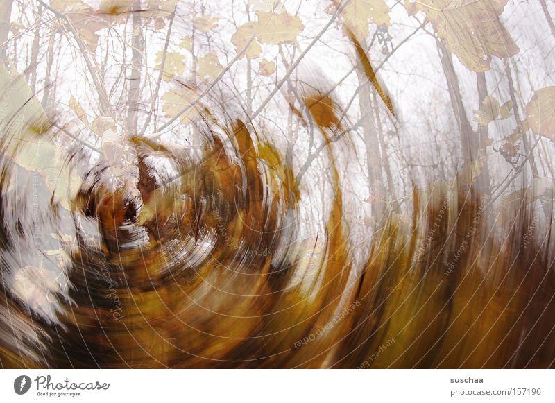 viel laub um nichts .. Blatt Ast Baum Herbst Sturm Verwirbelung Drehung rund Wald Natur braun Ton-in-Ton kalt Wärme Vergänglichkeit im kreis