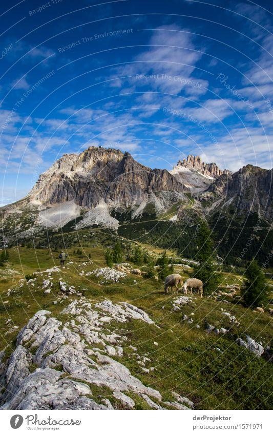 Dolomitenidylle mit Schafen Natur Ferien & Urlaub & Reisen Pflanze Sommer Erholung Landschaft Tier Ferne Berge u. Gebirge Umwelt Gefühle Wiese Freiheit Felsen