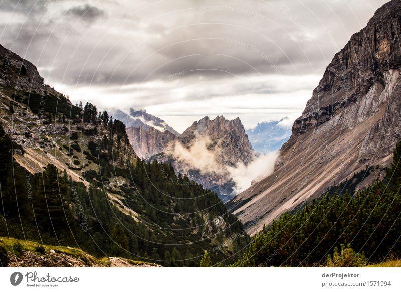 Durchwachsene Schönheit Ferien & Urlaub & Reisen Tourismus Ausflug Abenteuer Ferne Freiheit Berge u. Gebirge wandern Umwelt Natur Landschaft Pflanze Tier Sommer
