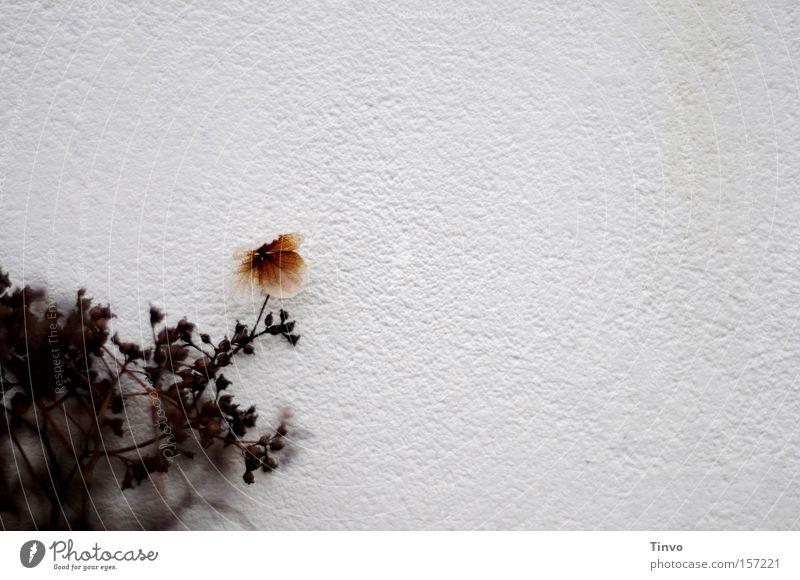 Mauerblümchen Strukturen & Formen Garten Pflanze Schüchternheit Schattendasein Einsamkeit zurückziehen Blume dezent Park Kletterhortensie