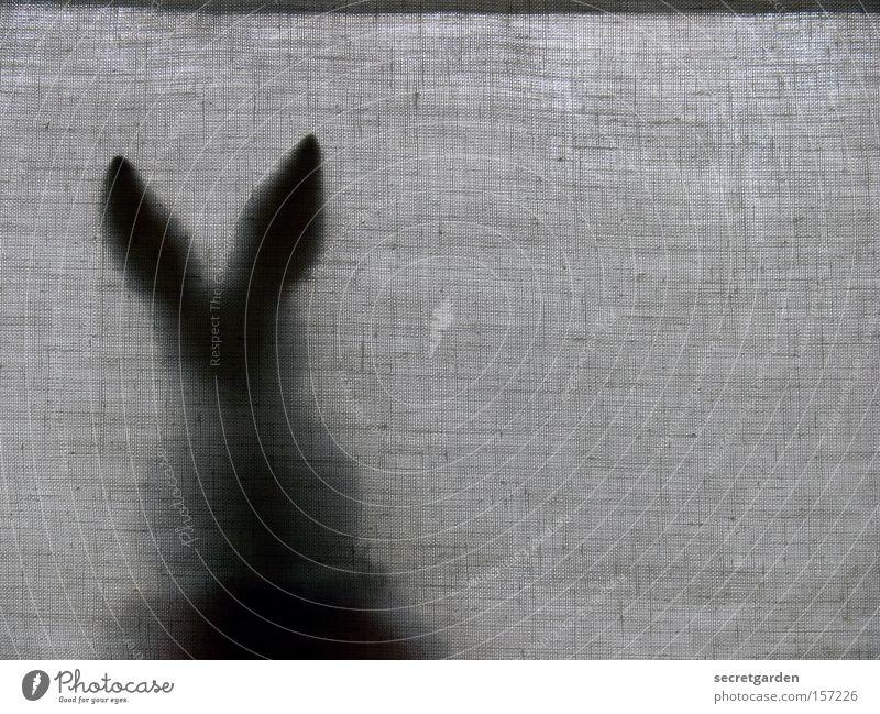 bratschersuchspiel. Hase & Kaninchen Schatten hinten rückwärts Ostern sitzen Schwarzweißfoto Vorhang Jalousie Fenster Pause Versteck dunkel