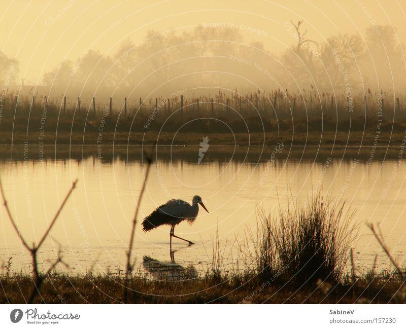 Natur Strand See Vogel Küste Frankreich Teich Physis Dunst Sepia Storch Tier sepiafarben Moorsee