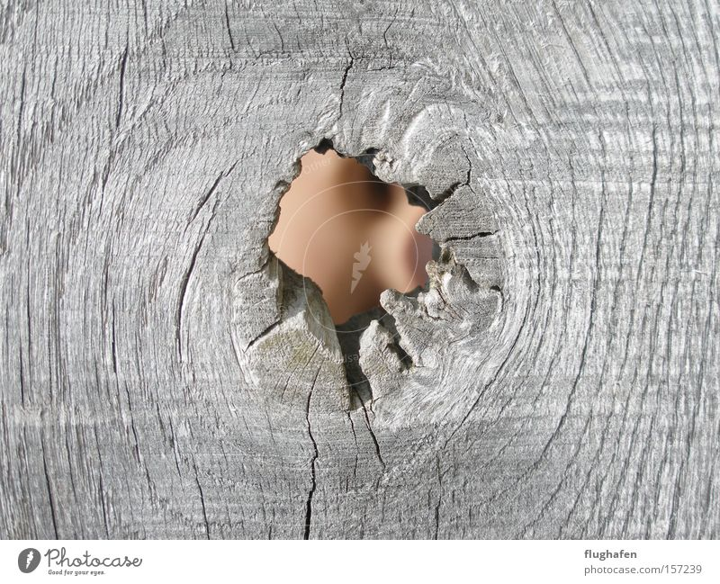 Ist nichts darin? Doch! Gesicht Holz grau verstecken Loch Durchblick Mensch Astloch Blick