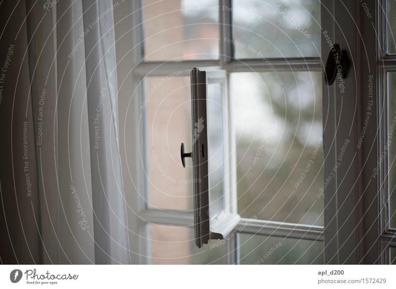 Hoffenster Stadt weiß Haus Fenster Holz klein grau Design Metall Kommunizieren elegant Glas ästhetisch authentisch beobachten