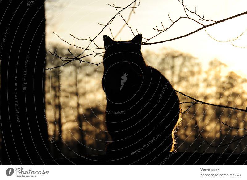 Endlich Ruhe. Himmel Baum Sonne Winter Katze Sicherheit Säugetier Zweig Natur Abendsonne