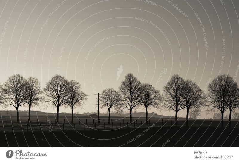 Abendstimmung Schwarzweißfoto Allee Bäume Winter sich[Akk] beugen Ruhe Entspannung Stille Dorf Land Landschaft Weide feld Wiese