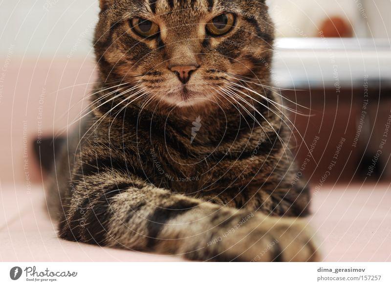 Tier Auge Farbe Farbstoff Katze Nase Ohr Säugetier Schlafzimmer