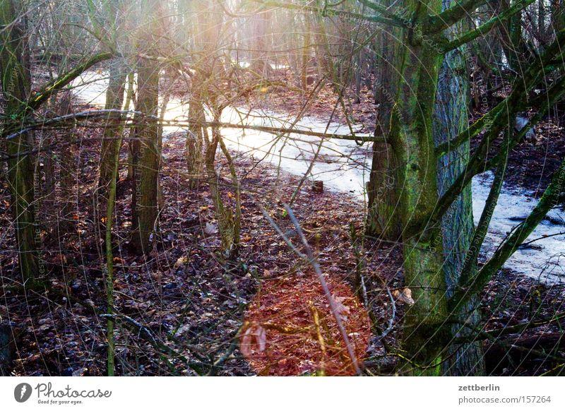Gegenwind Wald Laubwald Wege & Pfade Fußweg wandern Serpentinen Unterholz Schnee Eis Sonne Gegenlicht Winter Blendenfleck teufelsberg