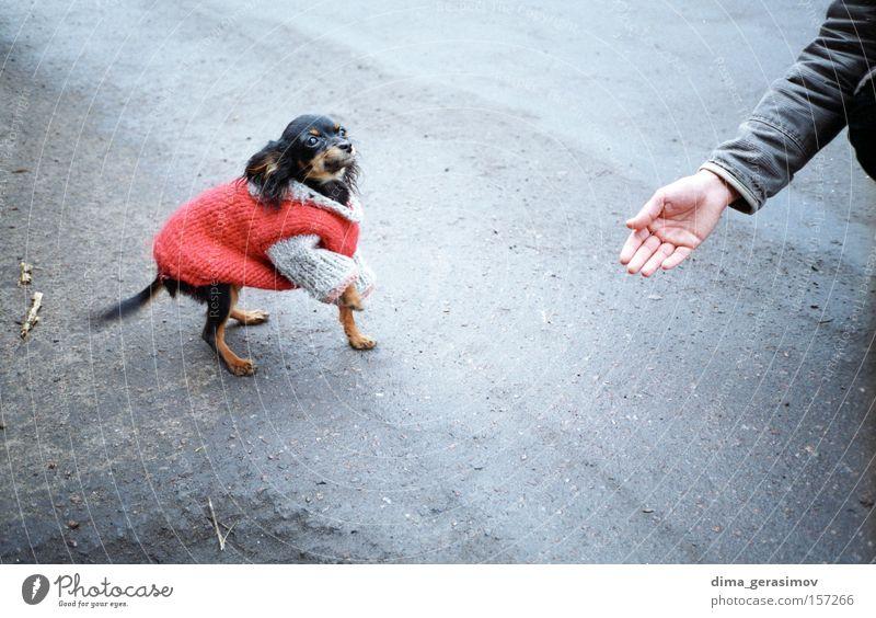 Hund 2 Tier Säugetier Straße Hand Lebensmittel Mahlzeit rot Asphalt Angst Gefühle Tallinn Leidenschaft Freude Farbe Sinn Außenaufnahme