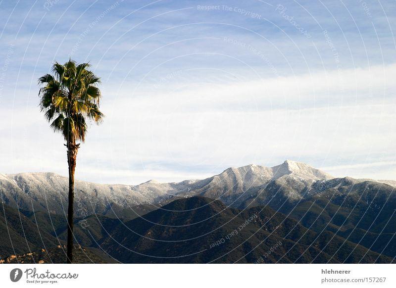 Südkalifornischer Schnee Kalifornien Natur Landschaft Wolken Berge u. Gebirge Reisefotografie Himmel Tourismus Winter kalt weiß Panorama (Aussicht) Baum