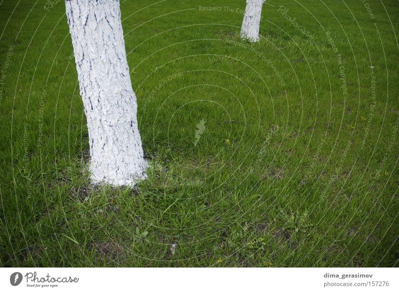 Natur weiß Baum grün Sommer Farbe Gras seltsam Moskau
