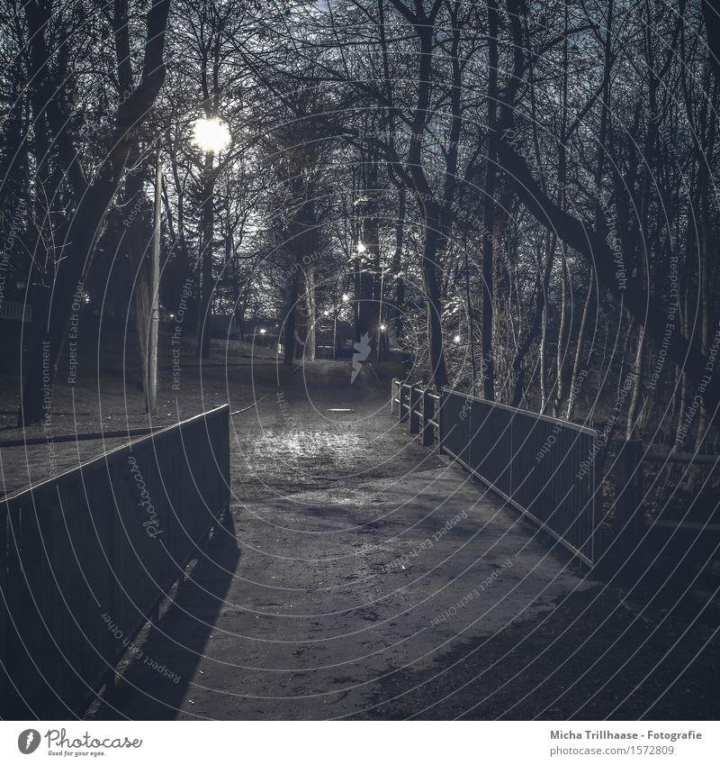 Nachts im Park Natur Pflanze blau weiß Baum Landschaft dunkel schwarz kalt Umwelt Architektur Wege & Pfade Sand gehen Metall