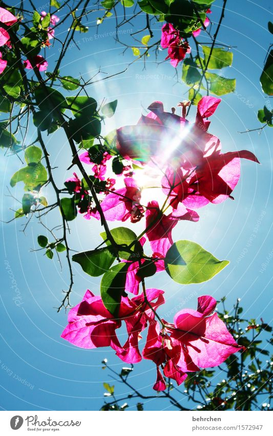 kriegsenkel | lichtblick Himmel Natur Ferien & Urlaub & Reisen Pflanze Sommer schön Baum Blume Blatt Ferne Wärme Blüte Garten Freiheit Tourismus hell